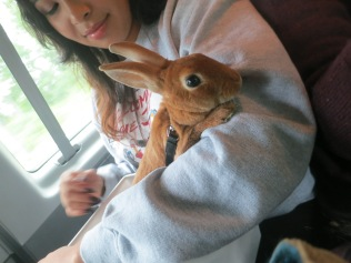 Softest Bunny